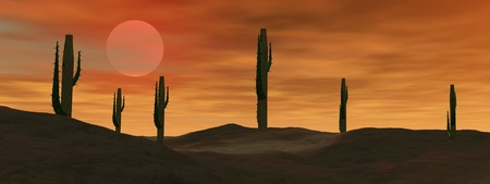 Cactus in the desert by cloudy sunset Stock Photo - 10897069