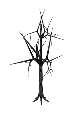 Dead tree with no leaves isolated in white background Stock Photo - 10897071