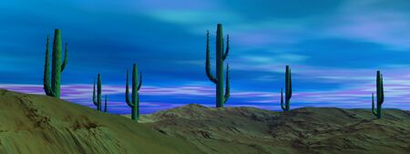 Cactus in the desert by cloudy blue morning Stock Photo - 11067675
