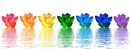 Chakra colors of lily flower upon water in white background photo