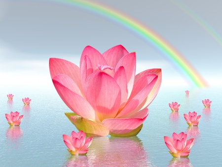 lillies: Pink lily flowers on water and under rainbow by beautiful weather Stock Photo