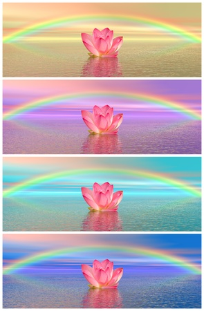 Set of different colors of pink lily flowers on water and under rainbow