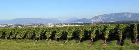 Vineyards, Saleva and Alps mountains with Mont-Blanc in Geneva area, Switzerland photo