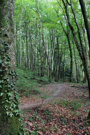 primaeval: Footpath in the green forest at the end of summer Stock Photo