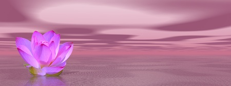 nymphaeaceae: Violet lily flower in ocean to symbolize seventh chakra