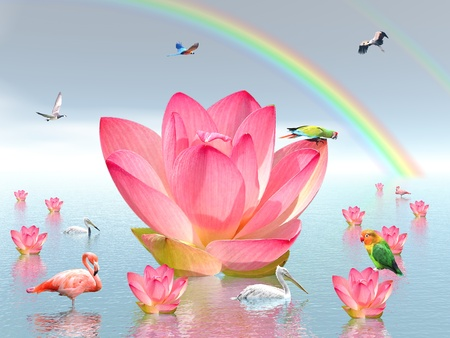 Pink lily flowers on water , under rainbow and surrounded by many birds by beautiful weather photo