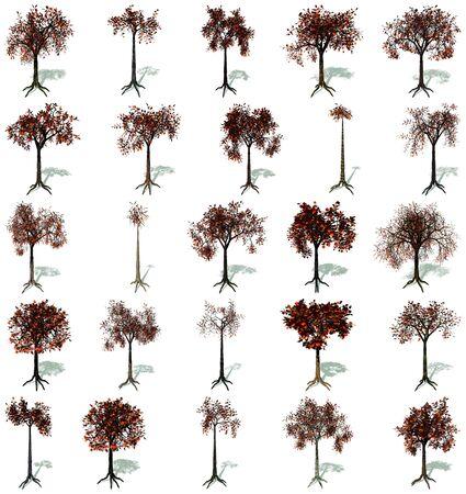 linden: 흰색 배경에 뿌리과 그림자, 가을에 나무의 집합 스톡 사진