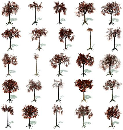 Set of trees in autumn, with their roots and shadows in white background