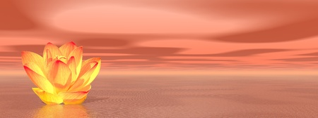 nymphaea: Orange lily flower in ocean to symbolize second chakra Stock Photo