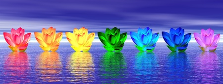 Chakra colors of lily flower upon water in blue night background photo