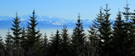 Panorama of the Alps mountains behind fi trees by beautiful winter day photo