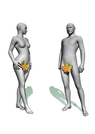 nude male: Naked Adam and Eve with a leaf in white background Stock Photo