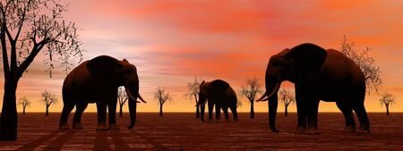 Shadows of three elephants standing between baobabs in the savannah by sunset photo