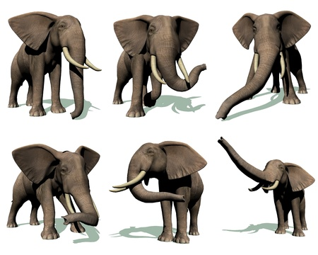 biggest animal: Set of six elephants in many position with their shadow in white background