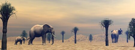 Two adult elephants and a little standing between baobabs in the savannah by cloudy morning light photo