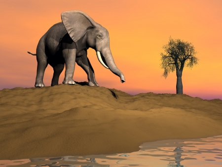 Elephant on a sand hill next to water ready to drink by sunset photo