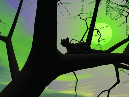 Silhouette view of panther sitting on the branch of a tree by green night with full moon photo