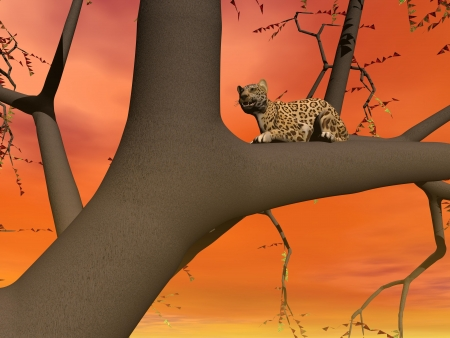 Panther sitting on the branch of a tree by sunsetorange light Stock Photo - 15186171