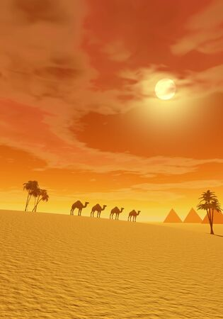 Camels walking in the desert between palmtrees and towards pyramids by sunset photo