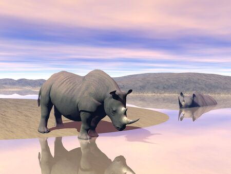 Thirsty rhinoceros drinking water next to another having a bath in the savannah by evening light photo