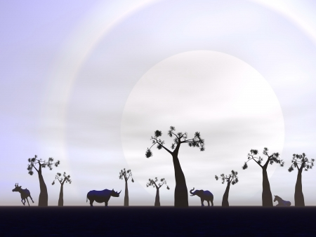 Shadows of animals in the savannah next to baobabs by hard sunset photo