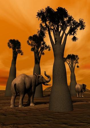 Two elephants walking between baobabs in the savannah by sunset photo
