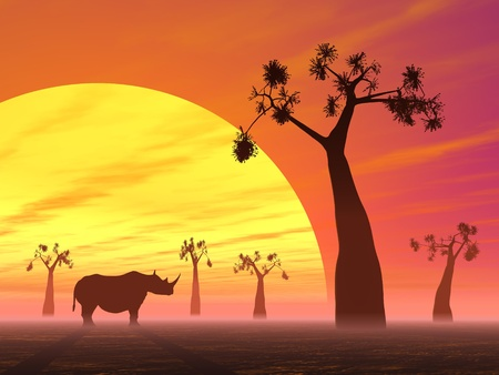 Shadows of a rhinoceros in the savannah next to baobabs by sunset photo