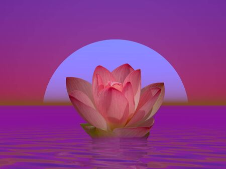 nymphaea: Pink lily flower on water in front of moon or sun