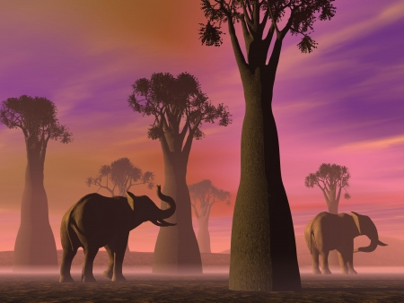 Two elephants walking between baobabs in the savannah by foggy morning light photo