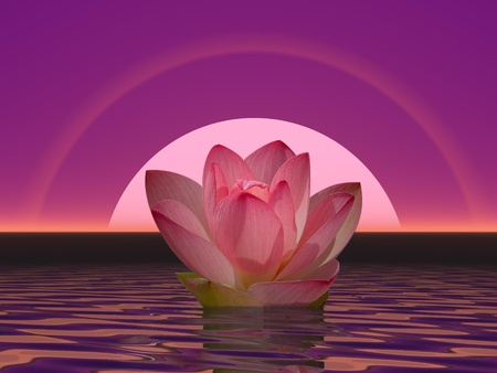 Pink lily flower on water in front of moon or sun with halos Standard-Bild