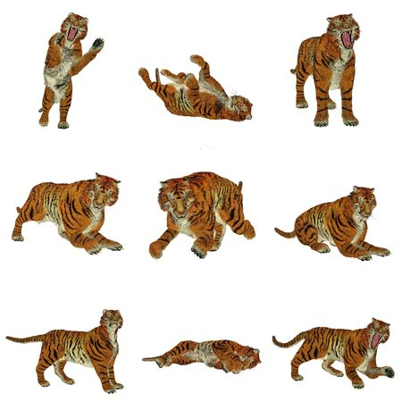 Set of nine big beautiful tiger poses in white background photo