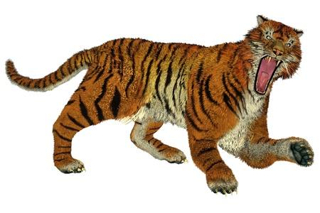 raging: Big beautiful tiger raging in white background