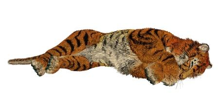 felidae: Big beautiful tiger sleeping in white background