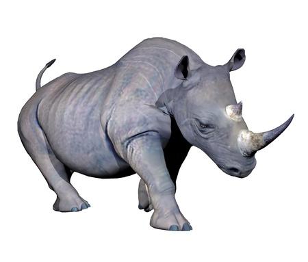 Grijze neushoorn opladen op witte achtergrond