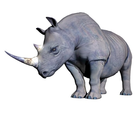 Grey rhinoceros head down in white background