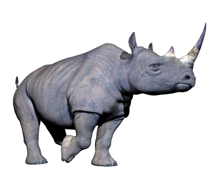 Grey rhinoceros running in white background photo