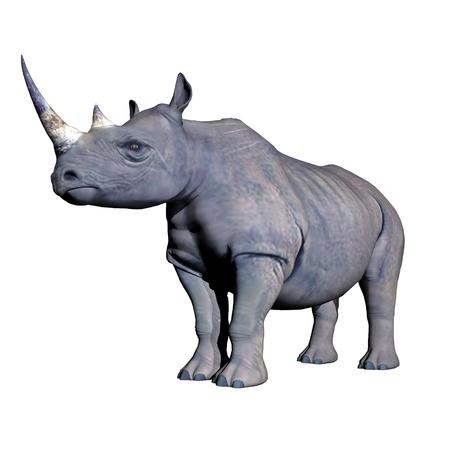 Grey rhinoceros standing in white background photo