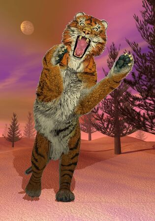 felidae: Big tiger attacking in fir trees woods by winter night Stock Photo