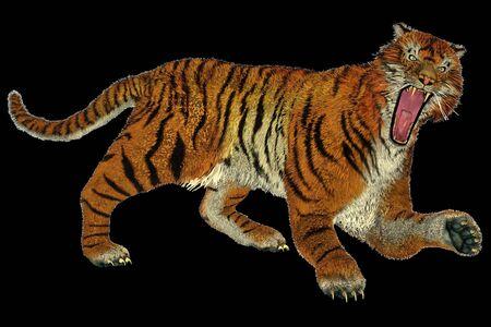 felidae: Big beautiful tiger raging in black background