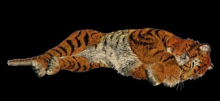 Big beautiful tiger sleeping in black background photo