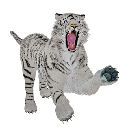 White tiger in attacking pose in white background photo