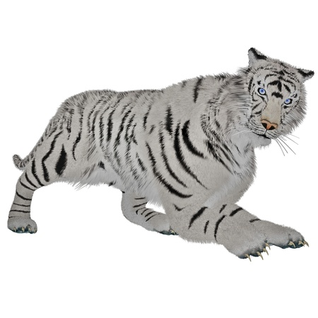 White tiger hunting in white background photo