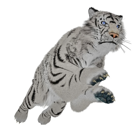 White tiger jumping in white background photo