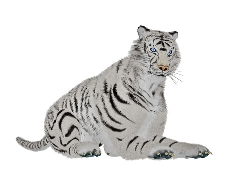 White tiger relaxing in white background photo