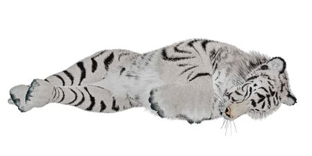 White tiger sleeping in white background photo