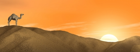 dune: One camel standing on a sand dune in the desert by sunset Stock Photo
