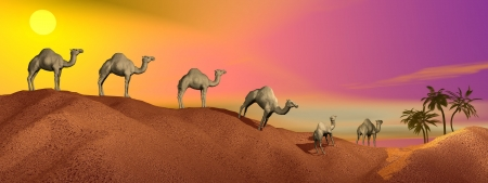 Caravan of camels walking in the desert to an oasis by sunset Stock Photo - 15793084
