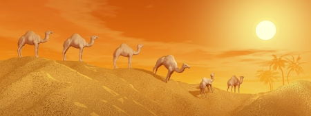 Caravan of camels walking in the desert to an oasis by sunset photo