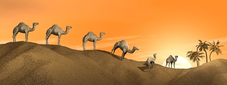 Caravan of camels walking in the desert to an oasis by sunset Stock Photo - 15893170