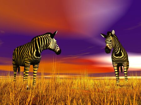 Two zebras looking at each other in the savannah by colorful sunset Stock Photo - 16032738